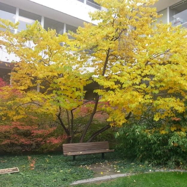 Flashback: Eddy courtyard, Fall 2013 (image by Jill Salahub)