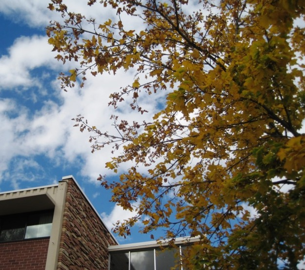 Ingersoll Hall in Fall, image by Jill Salahub